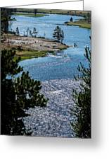 Buffs On River Greeting Card