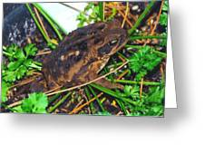 Bufo Toad Greeting Card