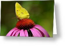 Bug Eyes Greeting Card