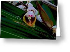 Bug Fx Greeting Card