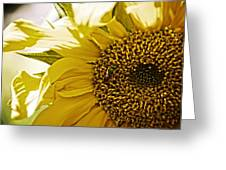 Bug In The Sunflower Greeting Card
