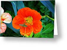 Bug On Flower Greeting Card