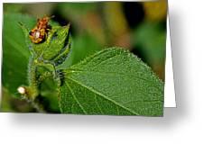 Bug On Leaf Greeting Card