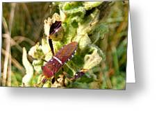 Bug On Stalk Of The Wooly Mullein Greeting Card