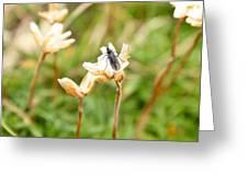 Bug On White Flower Greeting Card