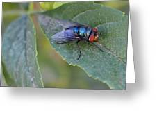 Bugging Me Greeting Card