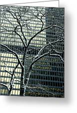 Building Reflection And Tree Greeting Card