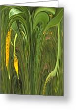 Bulbinella Latifolia Abstract Greeting Card