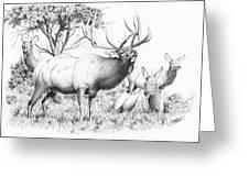 Bull And Harem Greeting Card
