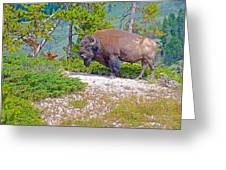 Bull Bison Near Mud Volcanoes In Yellowstone National Park-wyoming Greeting Card