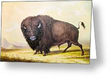 Bull Buffalo Greeting Card
