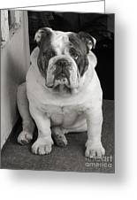 Bull Dog At Door Greeting Card