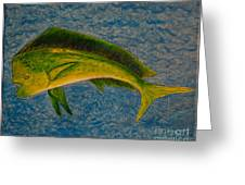 Bull Dolphin Mahimahi Fish Greeting Card