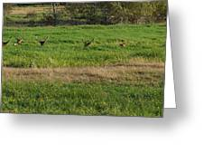 Bull Elk At Dean Creek Greeting Card