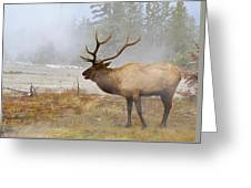 Bull Elk Bugles Loves In The Air Greeting Card