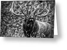 Bull Elk Bugling Black And White Greeting Card