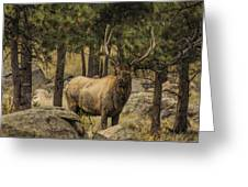 Bull Elk In Forest Greeting Card