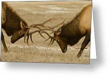 Bull Elk In The Rut   #8924 Greeting Card