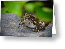 Bull Frog Greeting Card
