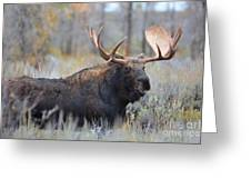Bull Grunt Greeting Card