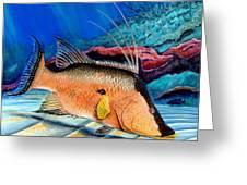 Bull Hogfish Greeting Card