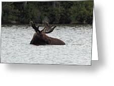 Bull Moose - 3587 Greeting Card