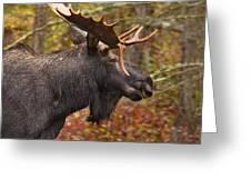 Bull Moose II Greeting Card