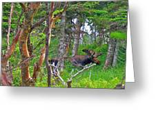 Bull Moose In Cape Breton Highlands Np-ns Greeting Card