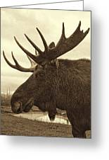 Bull Moose In Sepia Greeting Card