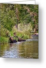 Bull Moose Summertime Spa Greeting Card