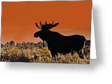 Bull Moose Sunset Greeting Card