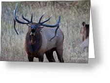 Bull Roar Greeting Card