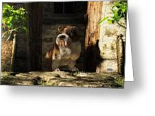 Bulldog In A Doorway Greeting Card