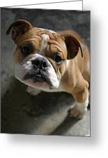 Bulldog Portrait Greeting Card