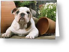 Bulldog Puppy With Flowerpots Greeting Card