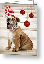 Holiday Bulldog Puppy  Greeting Card