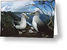 Bullers Albatrosses On Storm-lashed Greeting Card