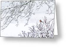 Bullfinch On A Snowy Branch Greeting Card