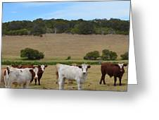 Bulls And Cow Greeting Card