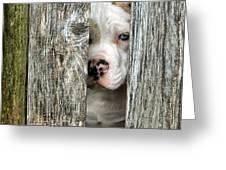 Bull's Eye - English Bulldog Greeting Card