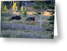 Bulls In The Meadow Greeting Card