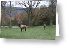 Bulls Of Fall Greeting Card