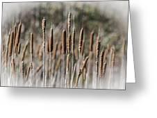 Bulrushes Greeting Card