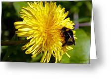 Bumble Bee And Dandelion Greeting Card