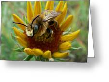 Bumble Bee Beauty Greeting Card