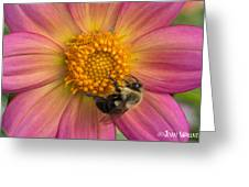Bumble Bee Dahlia Greeting Card