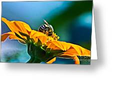 Bumble Bee I Greeting Card