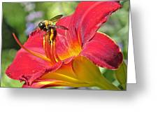 Bumble Bee In Day Lily 109 Greeting Card