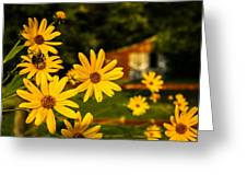 Bumble Bee On A Western Sunflower Greeting Card