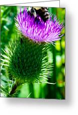 Bumble Bee On Bull Thistle Plant  Greeting Card